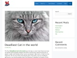 Top 10 Most Deadliest Cat In The World