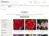Azaleas Online For Sale