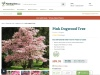 Top Quality Pink Dogwood Trees