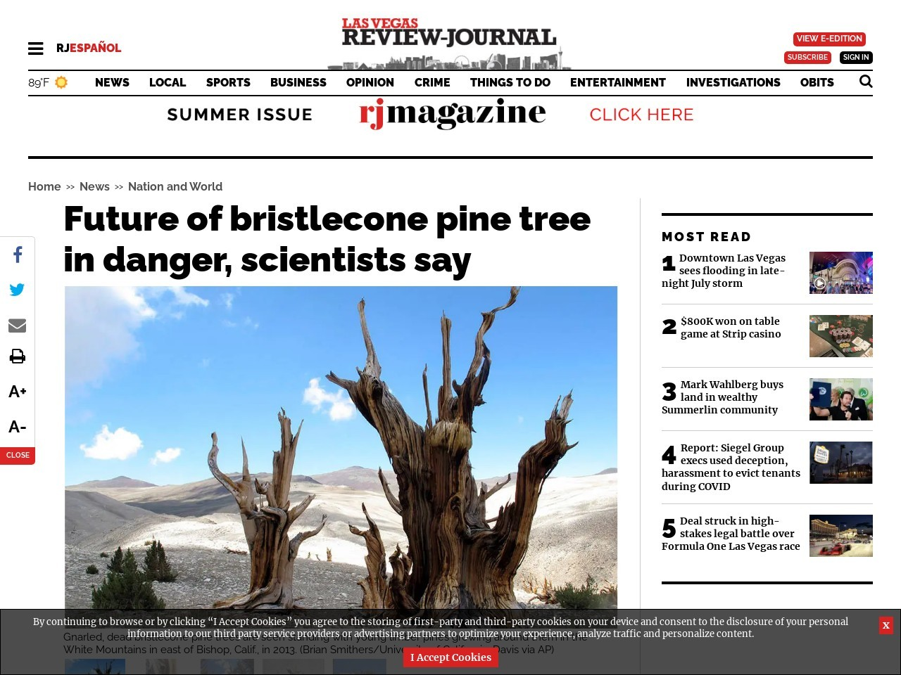 Future of bristlecone pine tree in danger, scientists say