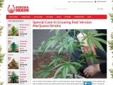 Special Care in Growing Fast Version Marijuana Strains