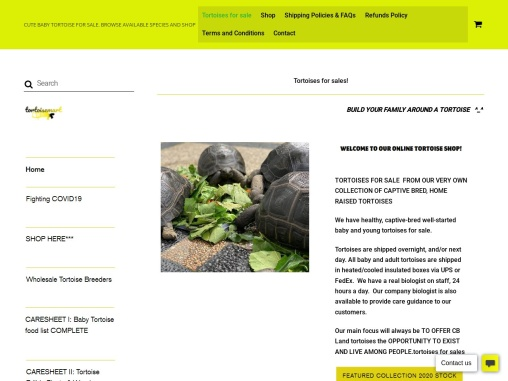 Buy Species Available of Tortoise online