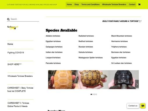 Buy Madagascar Spider tortoises