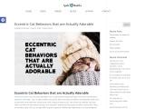 Eccentric Cat Behaviors that are Actually Adorable – Lynda Hamblen