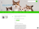 Beautiful Kittens and cats for sale