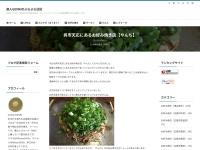 呉市天応にあるお好み焼き店【やんち】
