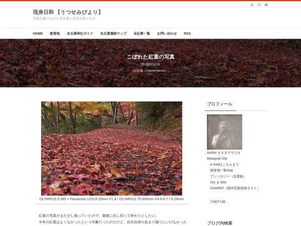 こぼれた紅葉の写真