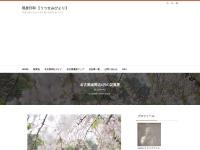 名古屋城周辺4月の花風景