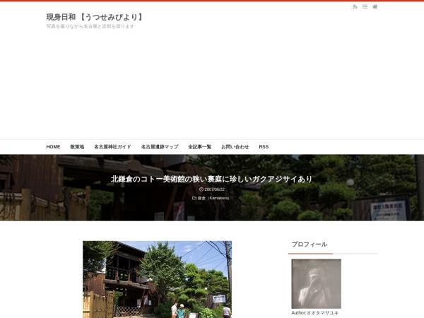 北鎌倉のコトー美術館の狭い裏庭に珍しいガクアジサイあり